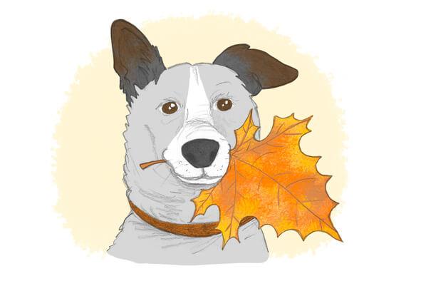 Je dessine le portrait de votre animal !